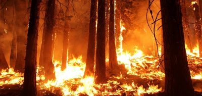 wildfire-1105209_960_720