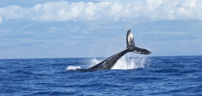 whales-1149978_960_720