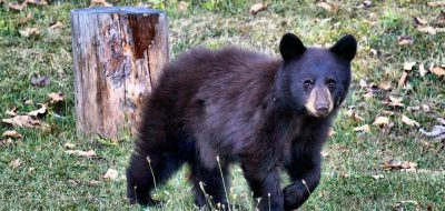little-bear-2992307_960_720