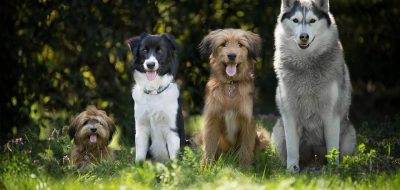 dogs-4189517_960_720